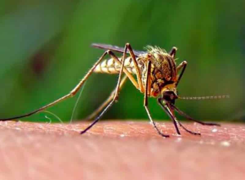Coronavirus, le zanzare diffondono il contagio? Parla il Prof Rezza