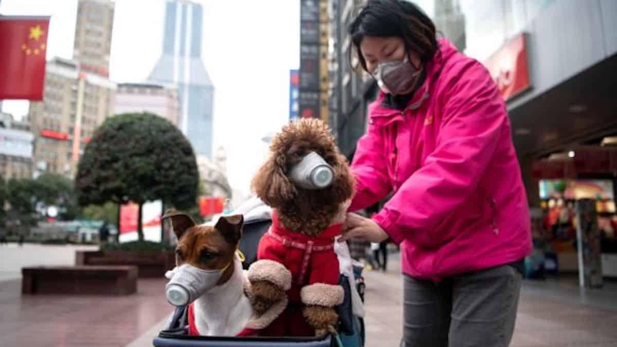 Coronavirus, cani e gatti sono contagiosi? Tutta la verità
